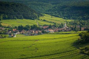 Auxey-Duresses-Expert-vin-de-bourgogne